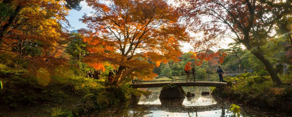 Autumn-Season-Tokyo-Header